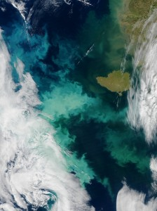 As sea ice retreats in summer, more sunlight reaches the upper layers of the sea, triggering increased blooms of phytoplankton such as here in the Bering Sea this fall. (Credit: NASA)