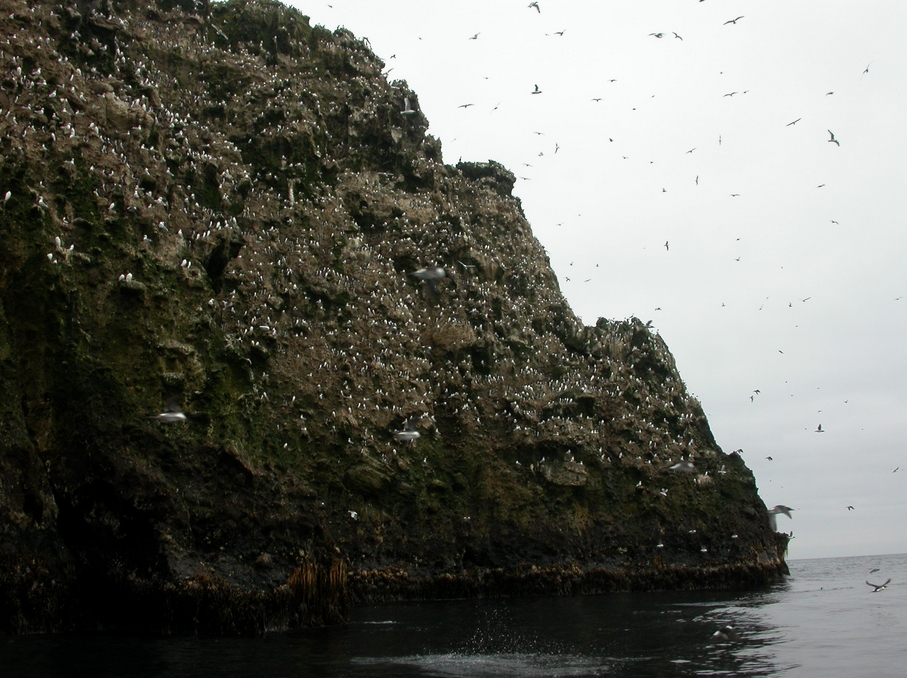 Buldir Island, with its tremendous population of seabirds, is just north of the Aleutian Trench, home to giant earthquakes. Photo by Ned Rozell.