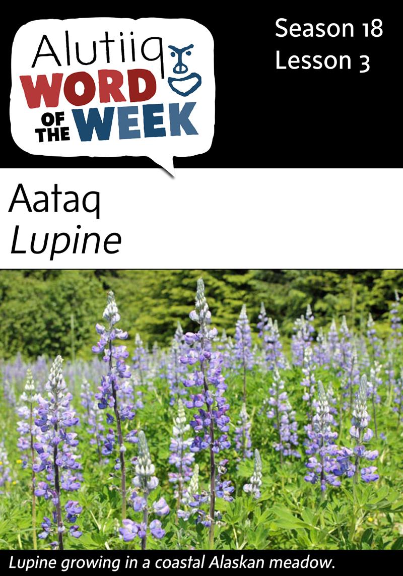 Lupine-Alutiiq Word of the Week-July 12