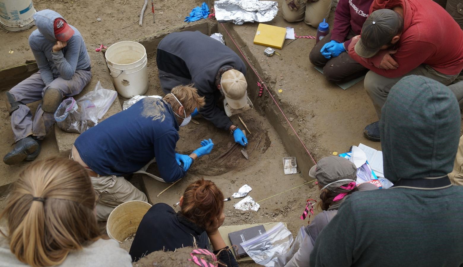 Image courtesy of Ben Potter, UAF Researchers work on excavation at the Upward Sun River site in Alaska.