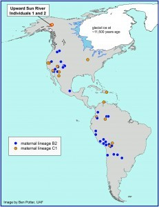 This map shows the location of the Upward Sun River site in Alaska where the remains of two infants were found in an 11,500-year-old burial. A new University of Utah analysis shows the infants belong to two genetic groups or lineages known as B2 and C1. The maps shows other Native American groups throughout the Americas that are part of the same lineages. Photo credit: Ben Potter, University of Alaska Fairbanks.