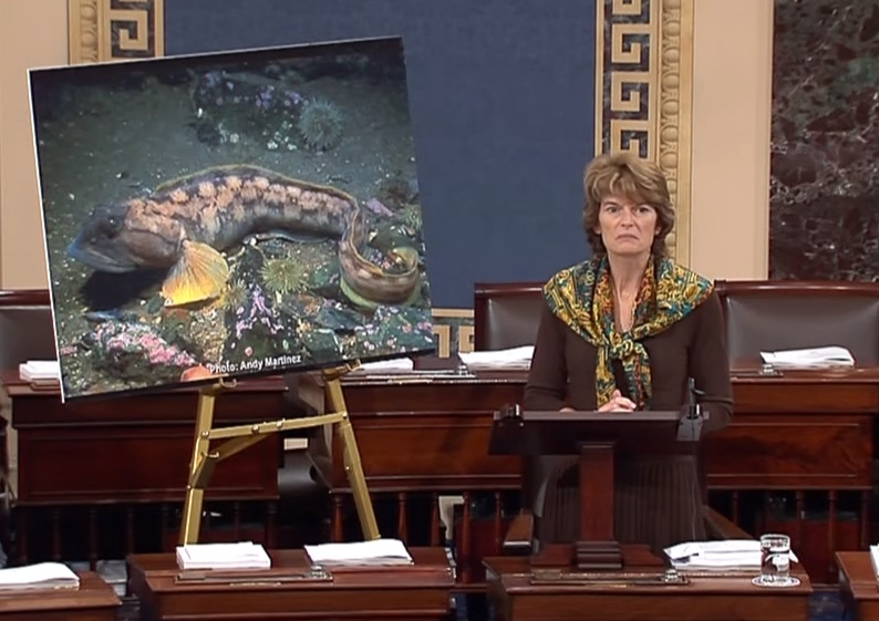 Senator Murkowski on Senate floor discussing the FDA's decision to approve AuquaBounty's application for their genetically altered Atlantic Salmon. Image-Office of Senator Murkowski