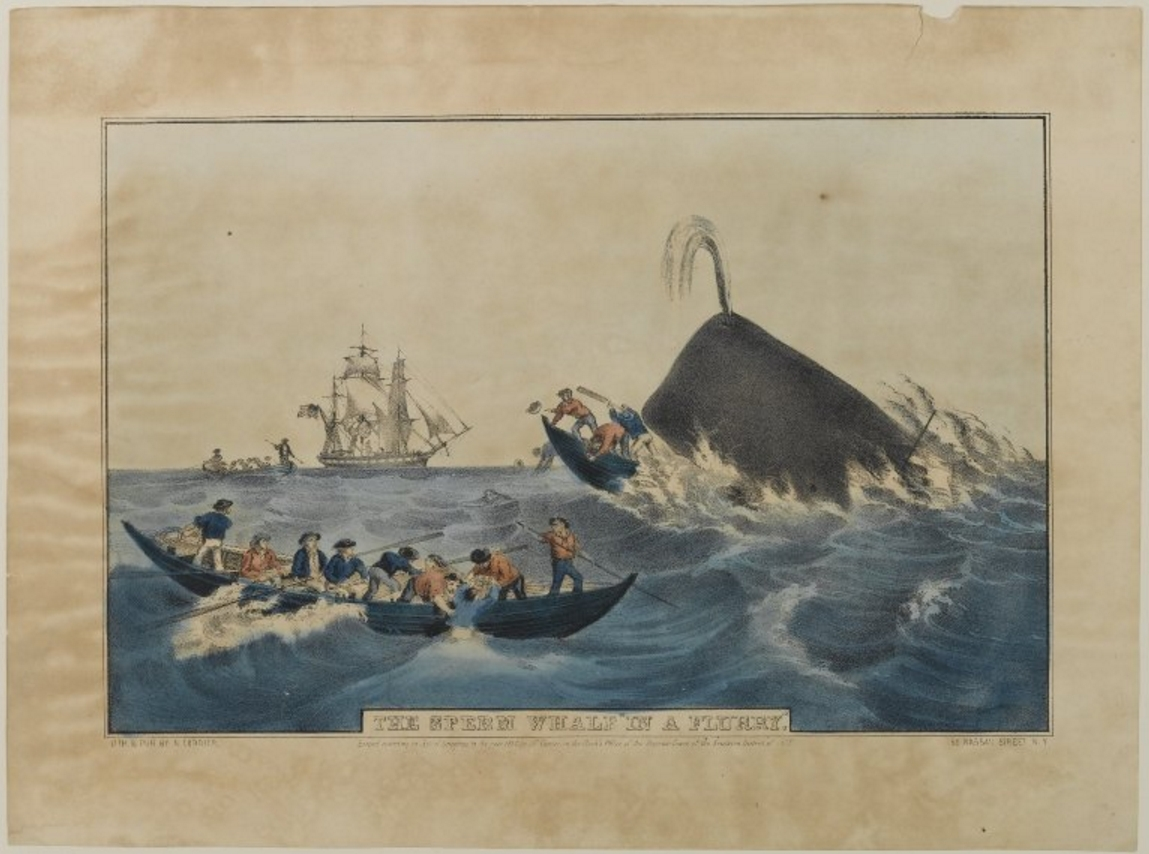 """Sperm Whale in a Flurry-Nathaniel Currier (1852)"