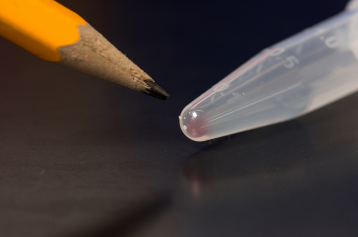 UW Team Stores Digital Images in DNA — and Retrieves Them Perfectly