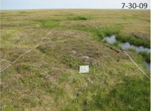 The same plot of tundra 23 years later. Image-Janet Jorgenson
