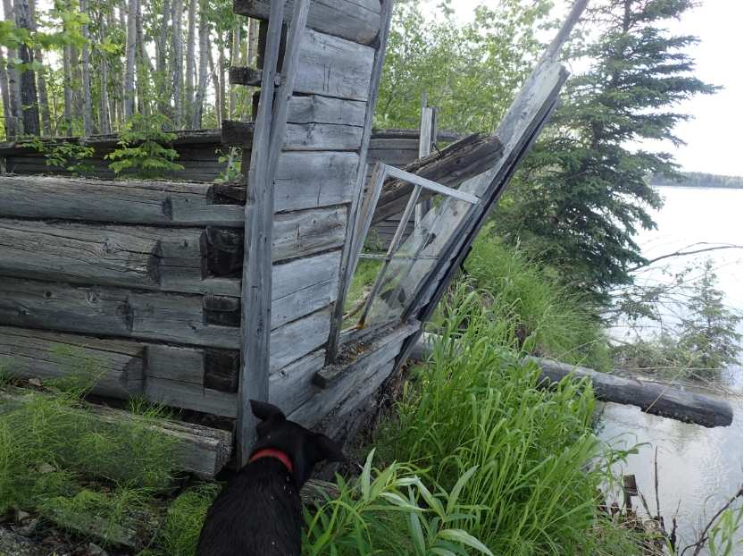 A building at the site of Cos Jacket, a former village on the Tanana River. Photo by Ned Rozell.