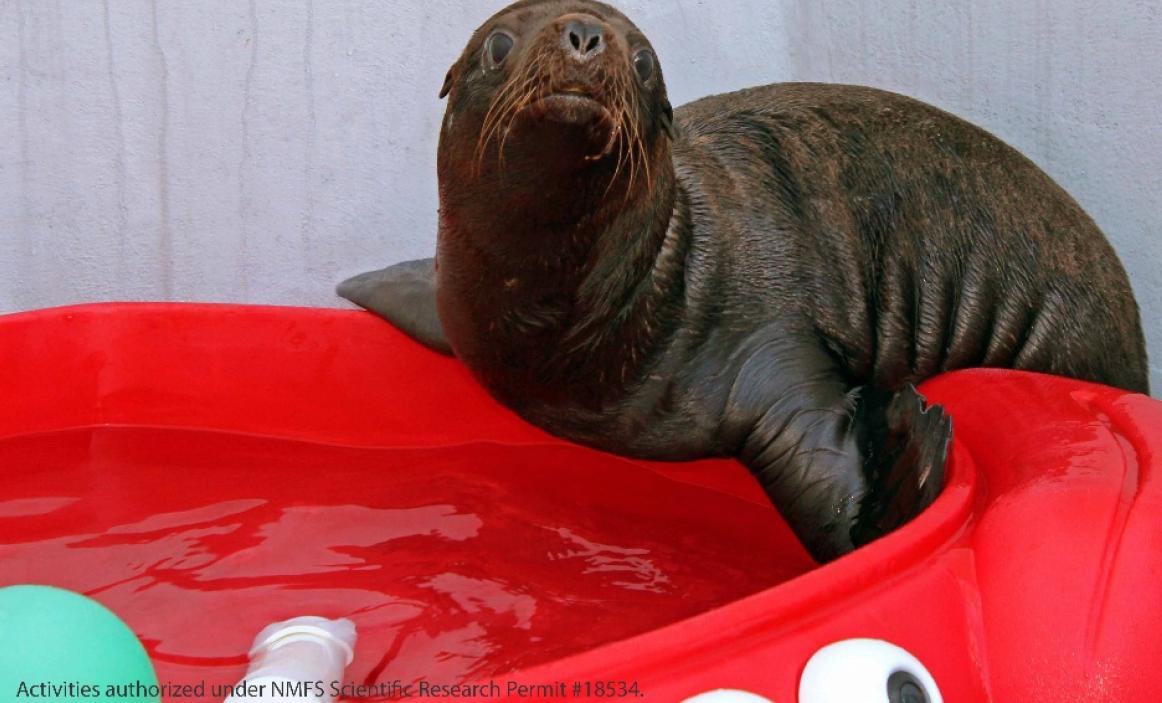 Newborn Sea Lion at Sealife Center. Image-Sealife Center