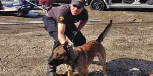 "K9 ""Helo,"" seen here during an exercise in 2013, died from gunshot injuries during a suspect pursuit. Image-AST"