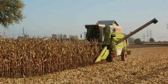 Corn harvesting. Image-Pixabay