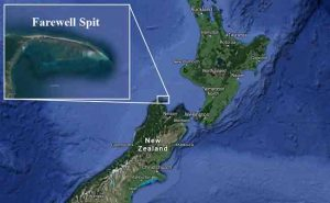 Farewell Spit on the South Island, has suffered another massive Pilot Whale stranding this week. Image-Google Maps