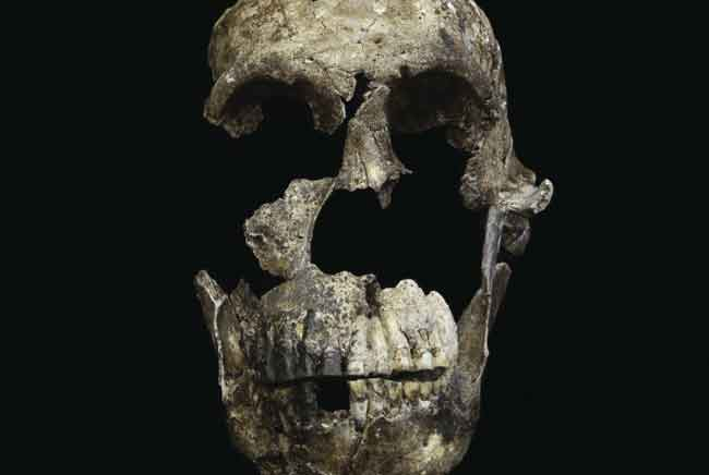 This skull, part of a skeleton that scientists have named Neo, was found in the Lesedi Chamber of the Rising Star Cave system in South Africa.John Hawks, the University of Wisconsin