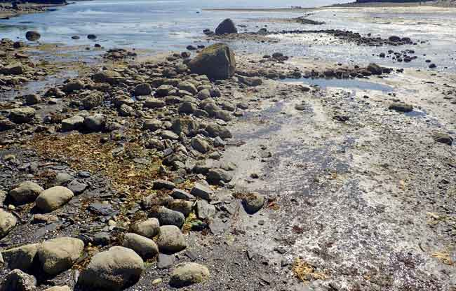 Rocks alignments representing the remains of an intertidal fish trap, Kodiak Island, Alaska. Photograph courtesy the Alutiiq Museum