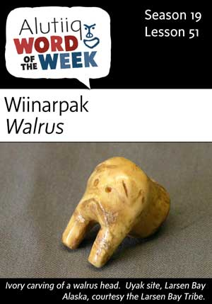 Walrus-Alutiiq Word of the Week-June 18th