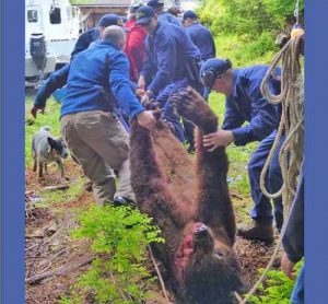 Sitka Trooper Academy recruits hauling off a bear shot in DLP. Image-ADF&G/Stephen Bethune