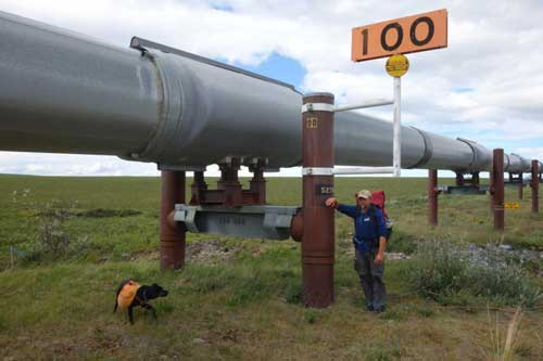 Ned Rozell at Trans-Alaska Pipeline mile 100, meaning that many miles remain to Pump Station One near Prudhoe Bay. Photo by Eric Troyer.