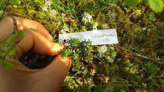 Berries. Image-alaska.edu