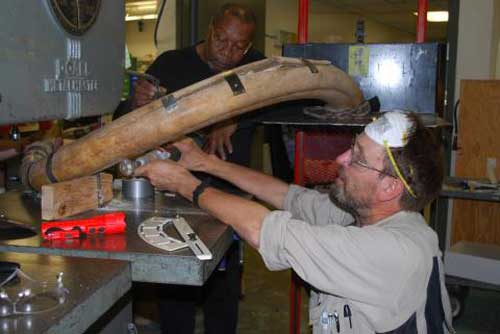 From left, Greg Shipman and Dale Pomraning of UAF's Geophysical Institute cut a 20,000-year old mammoth tusk with a band saw. Photo by Pam Groves.