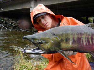 Casey McConnell gets up close and personal with a chum salmon that returned to Salmon Creek at the DIPAC hatchery in Juneau. Photo by Peter Westley.