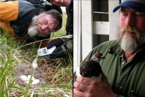 Left-Steve Ebbert and Jeff Williams marking a cackling goose nest on Nizki Island in 2004. Right-Steve Ebbert with a Rock Ptarmigan that he captured on QAttu and transported to Agattu Island. Images-Ned Rozell