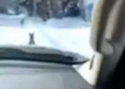 Screenshot of deer from the Snapchat video connected to the February 5th incident.