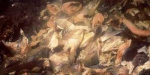 Underwater fish-waste. Image-EPA