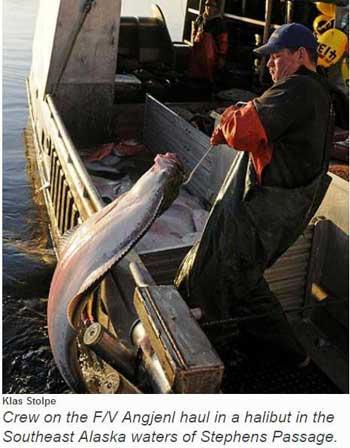 Alaska Halibut Fishermen Gear up for March 24 Season Opener