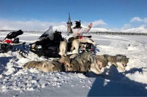 Wolves killed in Unit 13B. Image-Social media screengrab