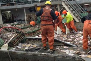 Deck sorting to release halibut in the Bering Sea. Credit: Paige Drobny/Spearfish Research.