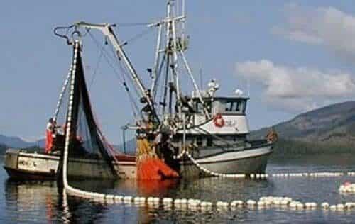 Alaska's Salmon Harvest Nears 71 Million Fish