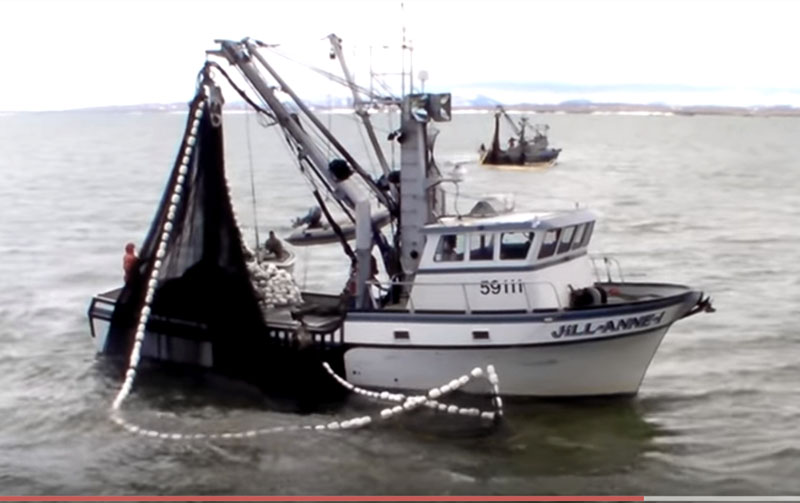 Two purse seiners take part in Togiak Herring fishery. Image-YouTube screengrab