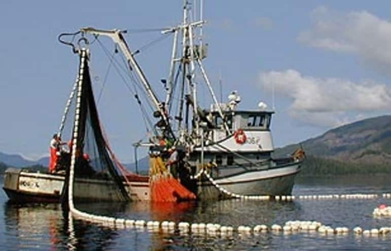 Salmon Harvests in Alaska Generally Below Expectations