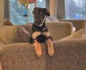 Stolen puppy. Image-Owner