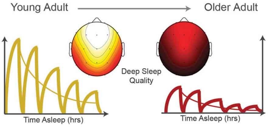 Deep Sleep Quality. Image-University of California-Berkley