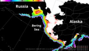 This microwave image shows Russia, the Bering Sea and Alaska as photographed by the Suomi NPP Satellite on Jan. 21. The scale in the top left shows sea ice concentration in percent, with red and white showing the most ice and blue and purple showing the least. Image provided by Carl Dierking.
