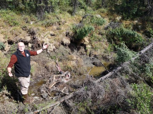 When permafrost kills? A moose story