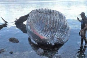 Dan Kirkwood of Pack Creek Bear Tours takes photos of the humpback whale carcass that washed ashore on Admiralty Island. Image-ADF&G
