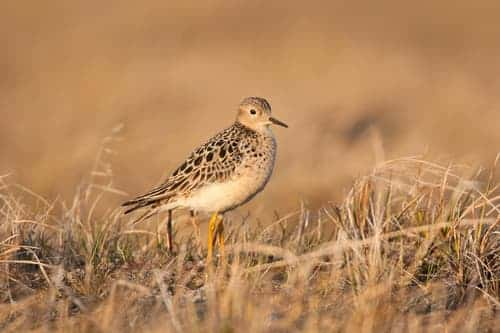 More Than 300 Scientists Oppose Arctic Refuge Drilling Plan
