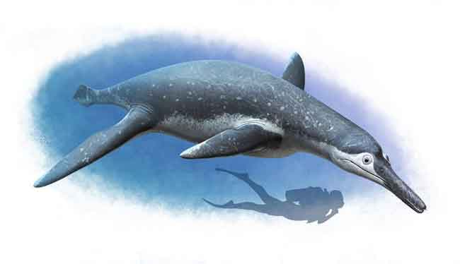 The life reconstruction of Luskhan itilensis is pictured. Both reconstructions are represented with a shadow figure of a diver for scale. CREDIT Andrey Atuchin