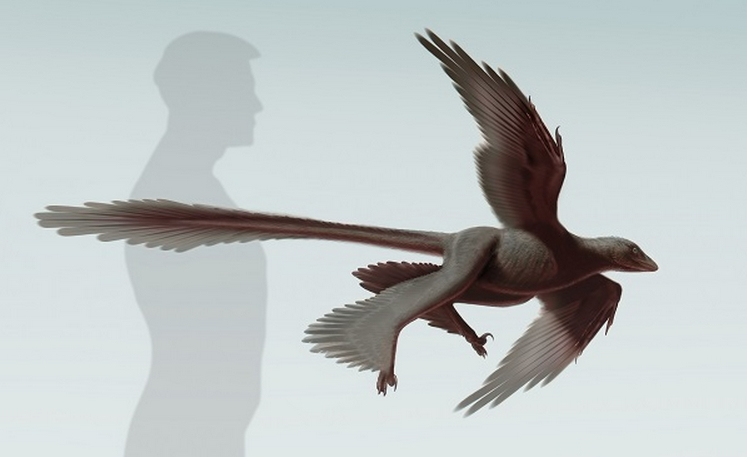 Life Reconstruction of Changyuraptor yangi, a 125 million-year-old microraptorine dinosaur from China. Credit: S. Abramowicz, Dinosaur Institute, NHM