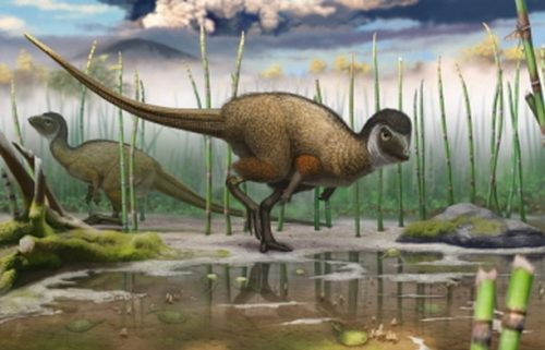 Fossils found in Siberia suggest all dinosaurs had feathers