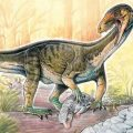 "An artist's rendering of the new species Teleocrater rhadinus hunting a cynodont, a close relative of mammals. (Gabriel Lio / Museo Argentino de Ciencias Naturales ""Bernardino Rivadavia"") Read more: http://www.smithsonianmag.com/science/there-were-dinosaurs-there-was-weird-crocodile-looking-thing-180962865/#g8YqXD6vuS2bI6bQ.99 Give the gift of Smithsonian magazine for only $12! http://bit.ly/1cGUiGv Follow us: @SmithsonianMag on Twitter"