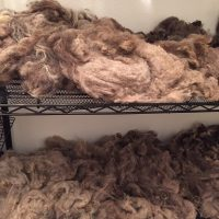 Fiber / fleece processing