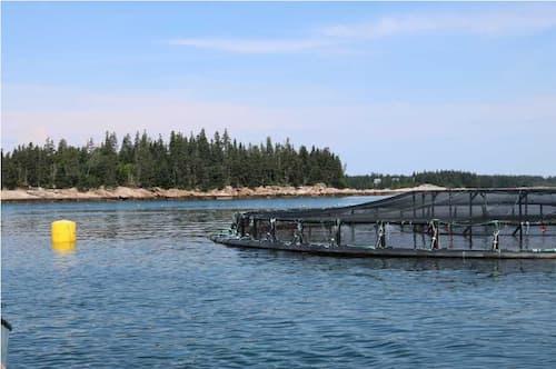 Salmon net pen aquaculture farm in Maine. Image-NOAA Fisheries