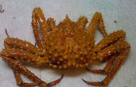Alaska Rejects New PWS Crab Fishery