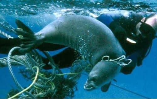 Young, Bonamici Unveil Next Step to Remove, Prevent Marine Pollution