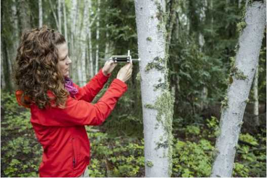 UAF Research Looks for Prime Time to Harvest Firewood