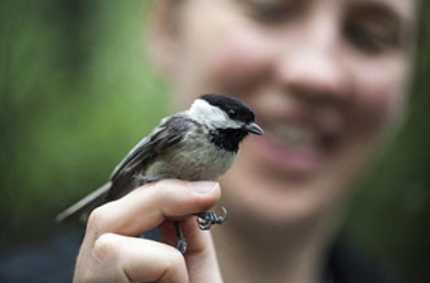 Scent Brings Songbirds to the Yard