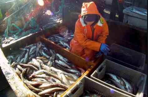 Alaska's Pollock Fishery: A Model of Sustainability