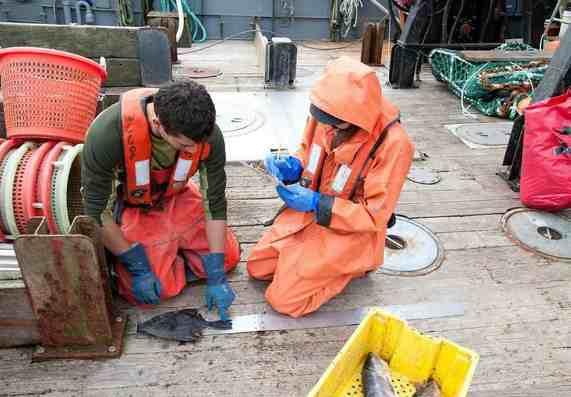 NOAA Fisheries Emergency Action Waives Some Observer Coverage