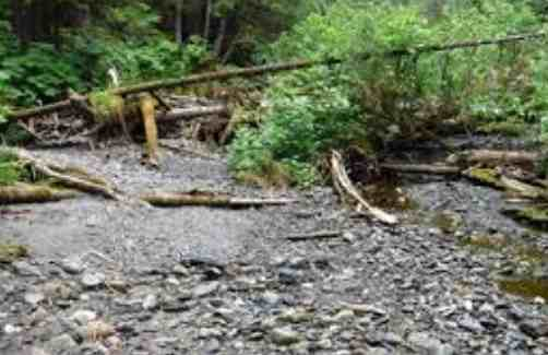 Alaska's Forests Contribute Millions of Salmon to Fisheries